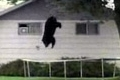 Bear vs. Trampoline