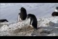Kriminella pingviner