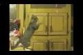 Katt Win & Fail Compilation!