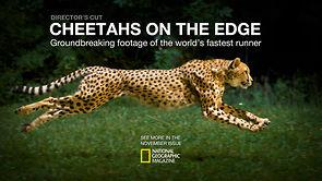 Gepard I slow motion