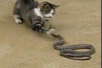 Katt vs Orm