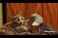 Papegojor retar katter - Samling