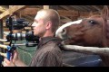 Horse is bugging cameraman
