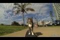 CAT Super Skateboarding Adventure! Go Didga! (ORIGINAL)
