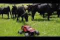 Kor jagar en radiostyrd bil