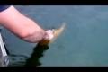Lekfull fisk